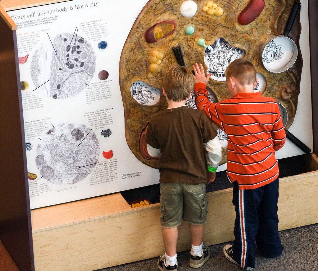 kids exploring a cell exhibit at the science museum