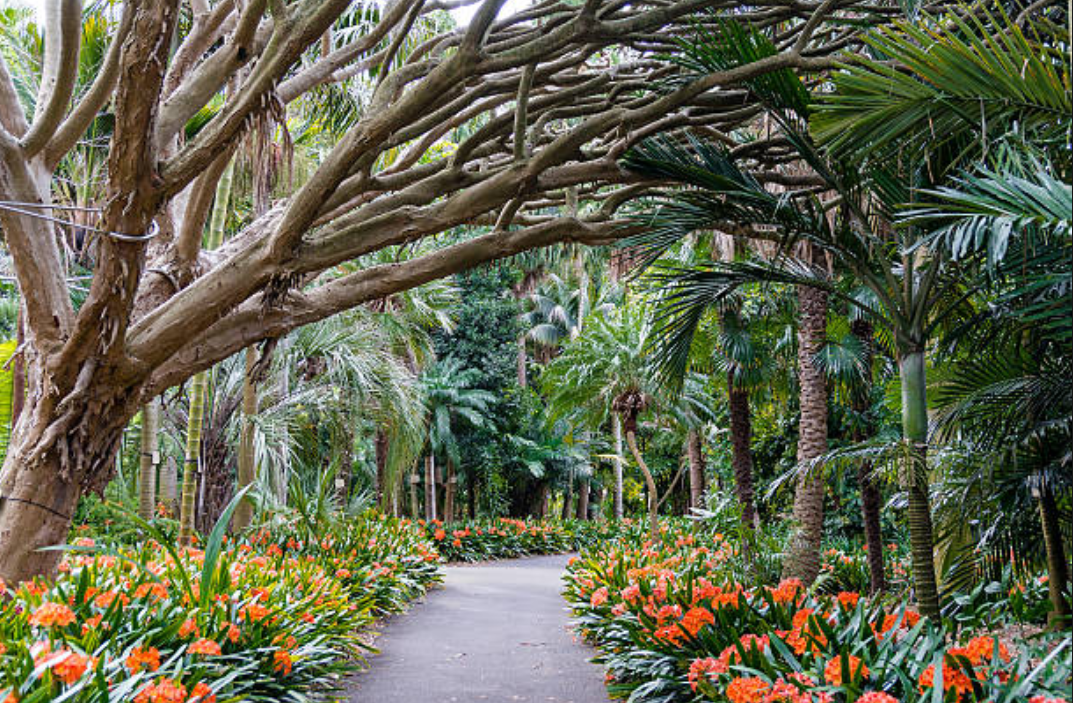botanical garden path with trees and flowers