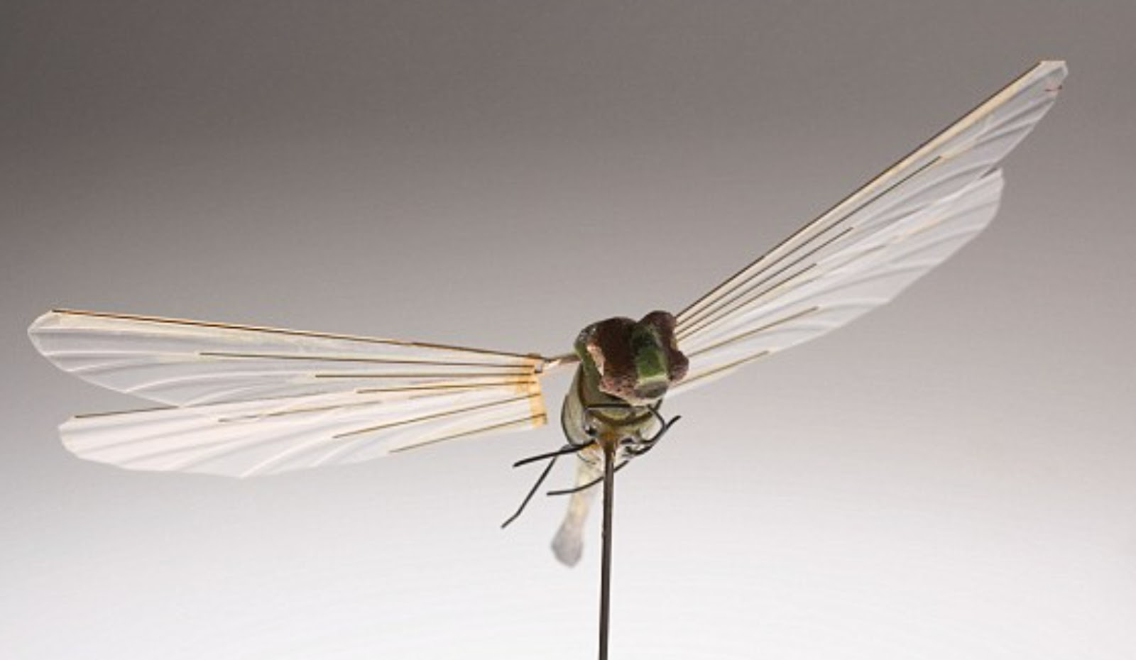 An 'insectothopter' drone