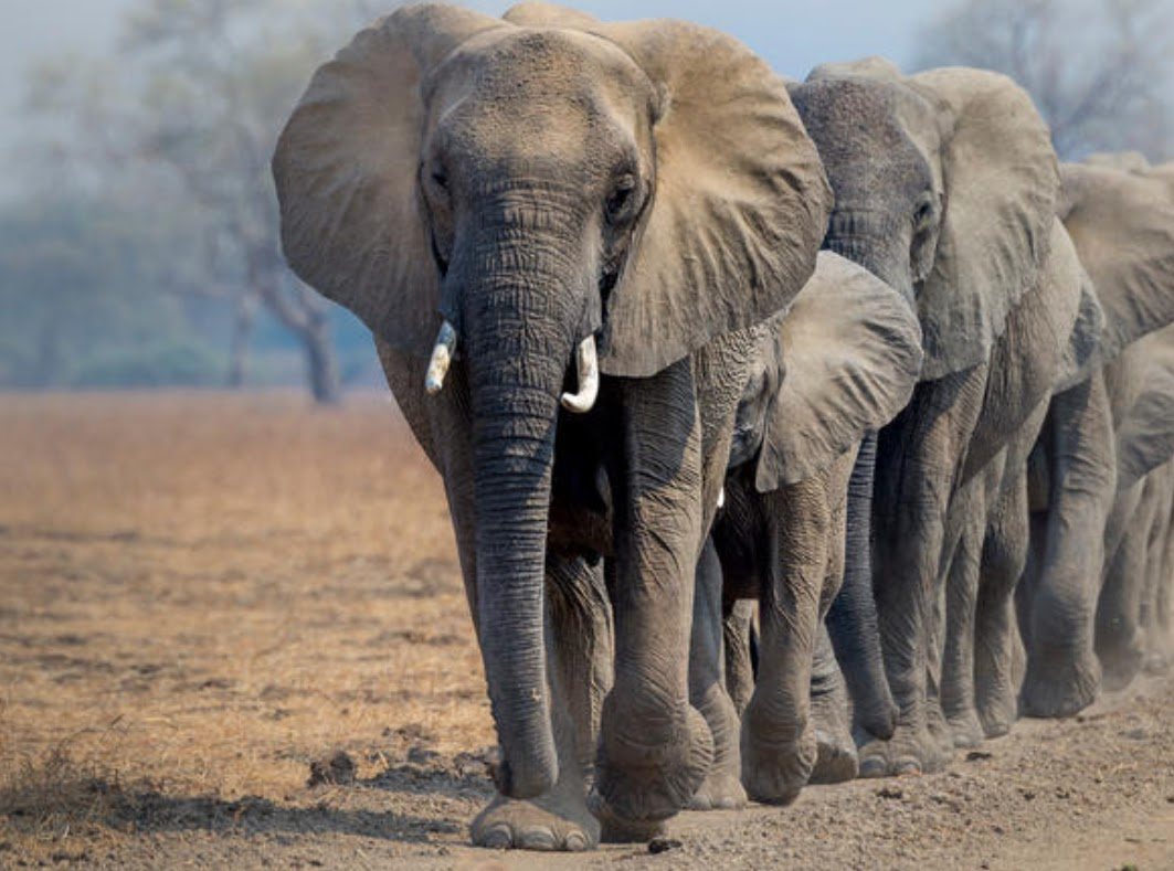 Earth League International focuses on elephants and wildife