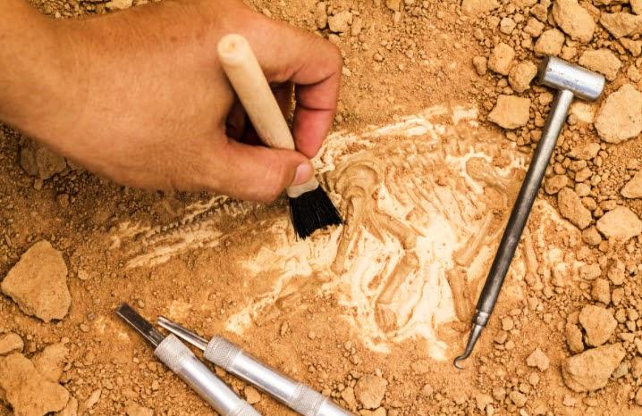archeolgical dig