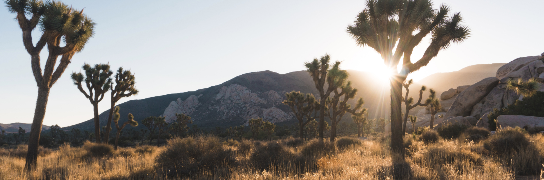 A landscape photo of Joshua Tree National Park