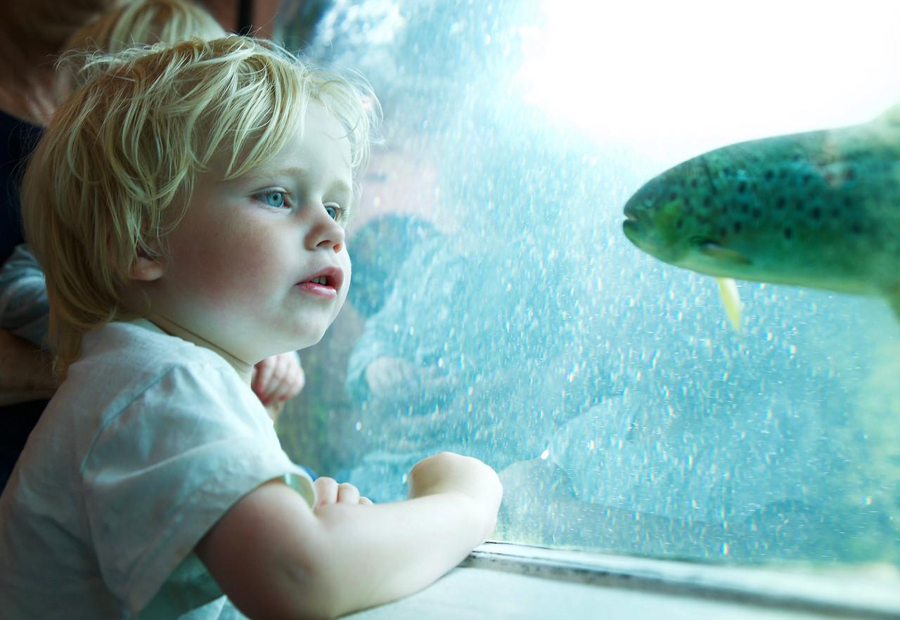 Born ser på fisk i laksestudio