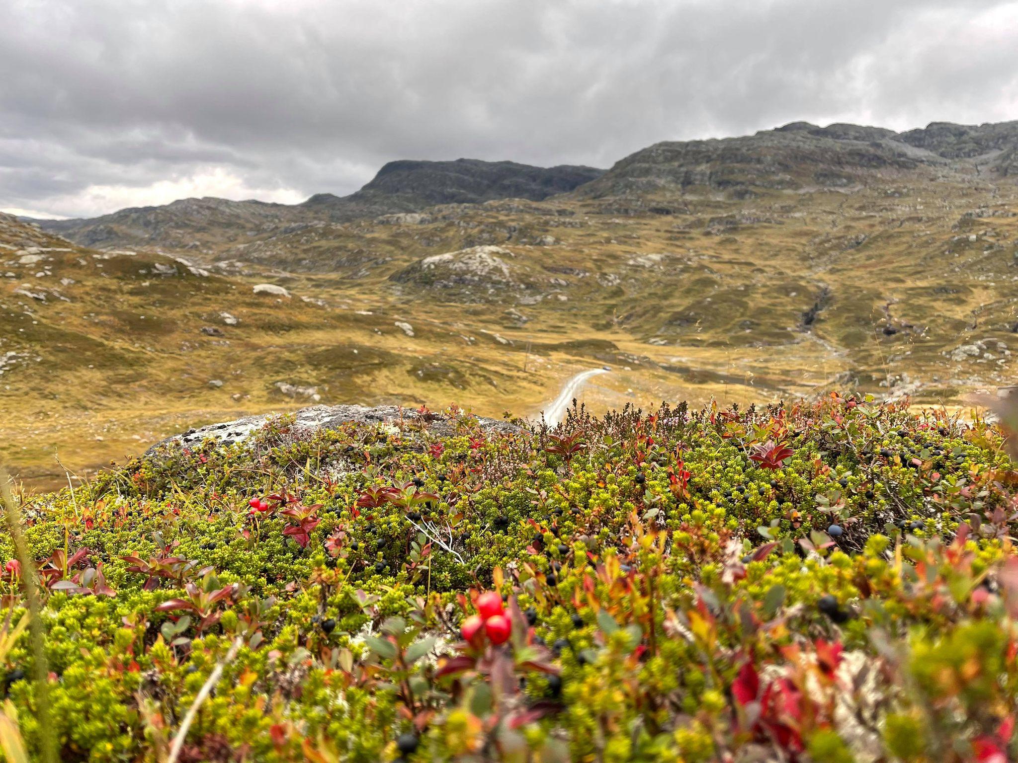 Bilde av naturlandskap