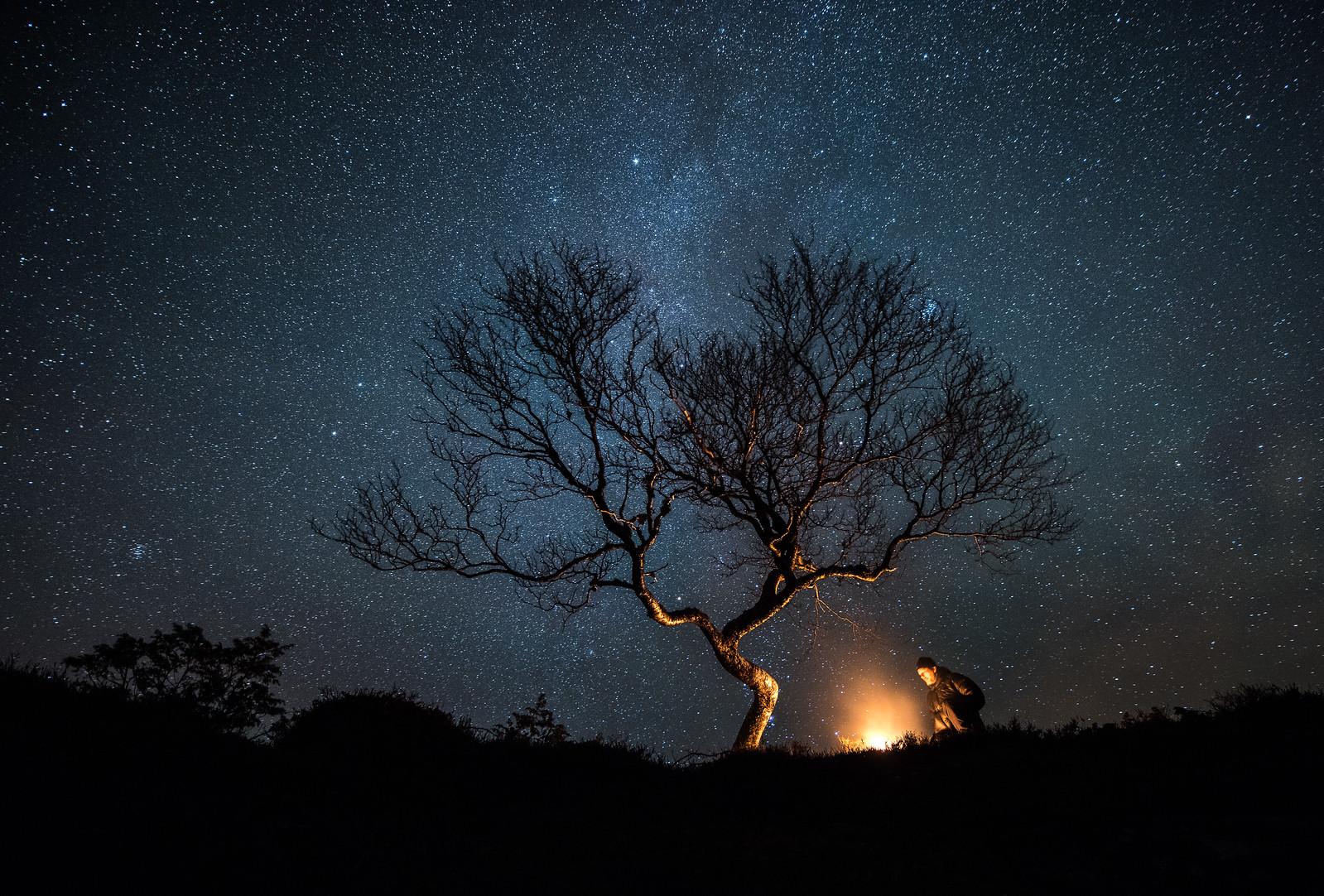 Person under tre med stjernehimmel.