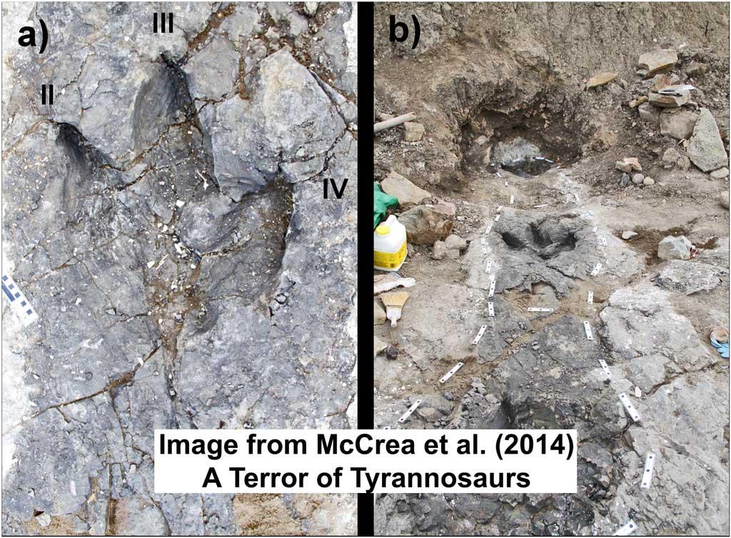 Tyrannosaur Trackways
