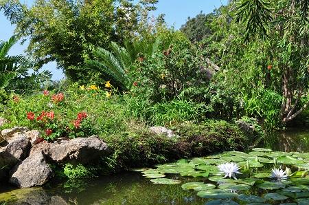 Ischia Botanical Gardens