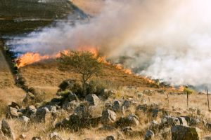 Preventative burning helps in preventing future wildfires.