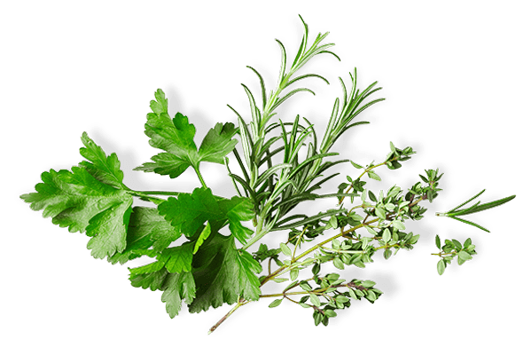 Green herbs bunch