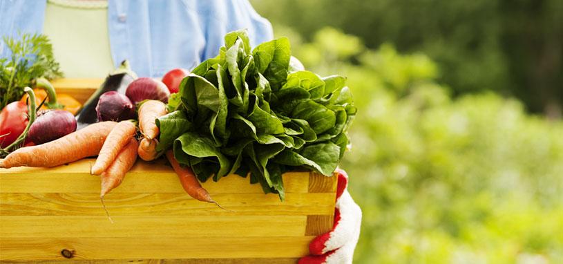 organic regenerative agriculture
