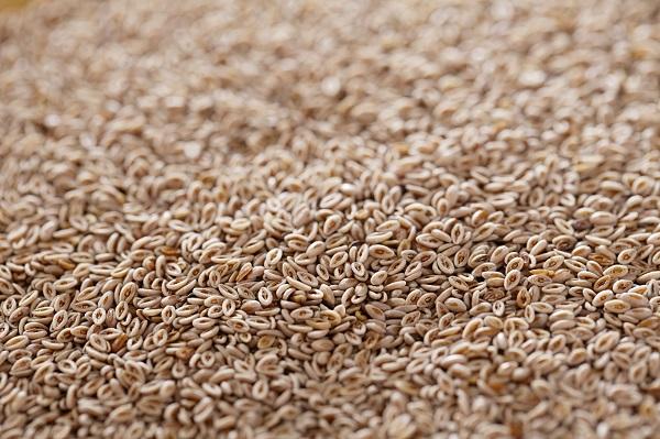 Lovage Seeds
