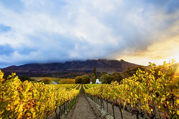 Constantia Vineyards