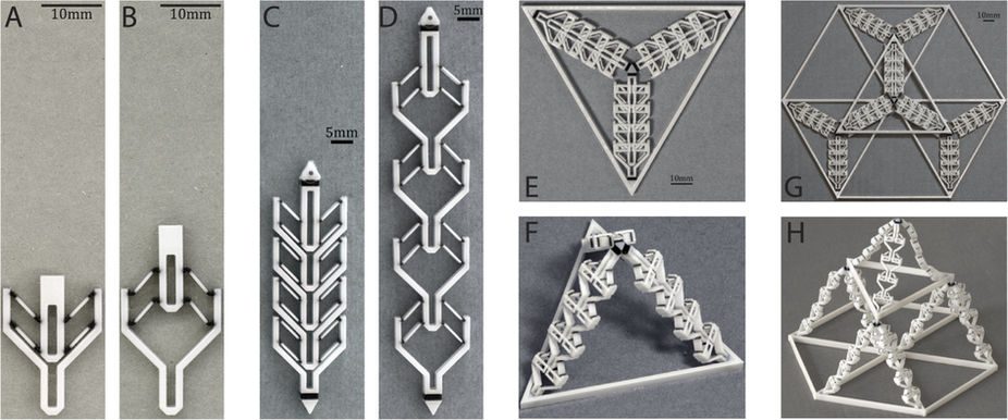 """3D printed assemblies that are """"programmed"""" to expand in response to pressure. Image: Tian Chen, Jochen Mueller, and Kristina Shea"""