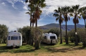 rv parked between palm trees on grassy field nomadic nurse