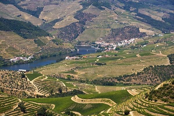 Vineyard Near Pinhao