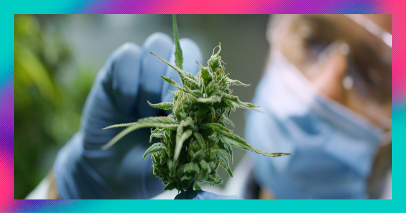 UK cannabis stocks still need to prove themselves