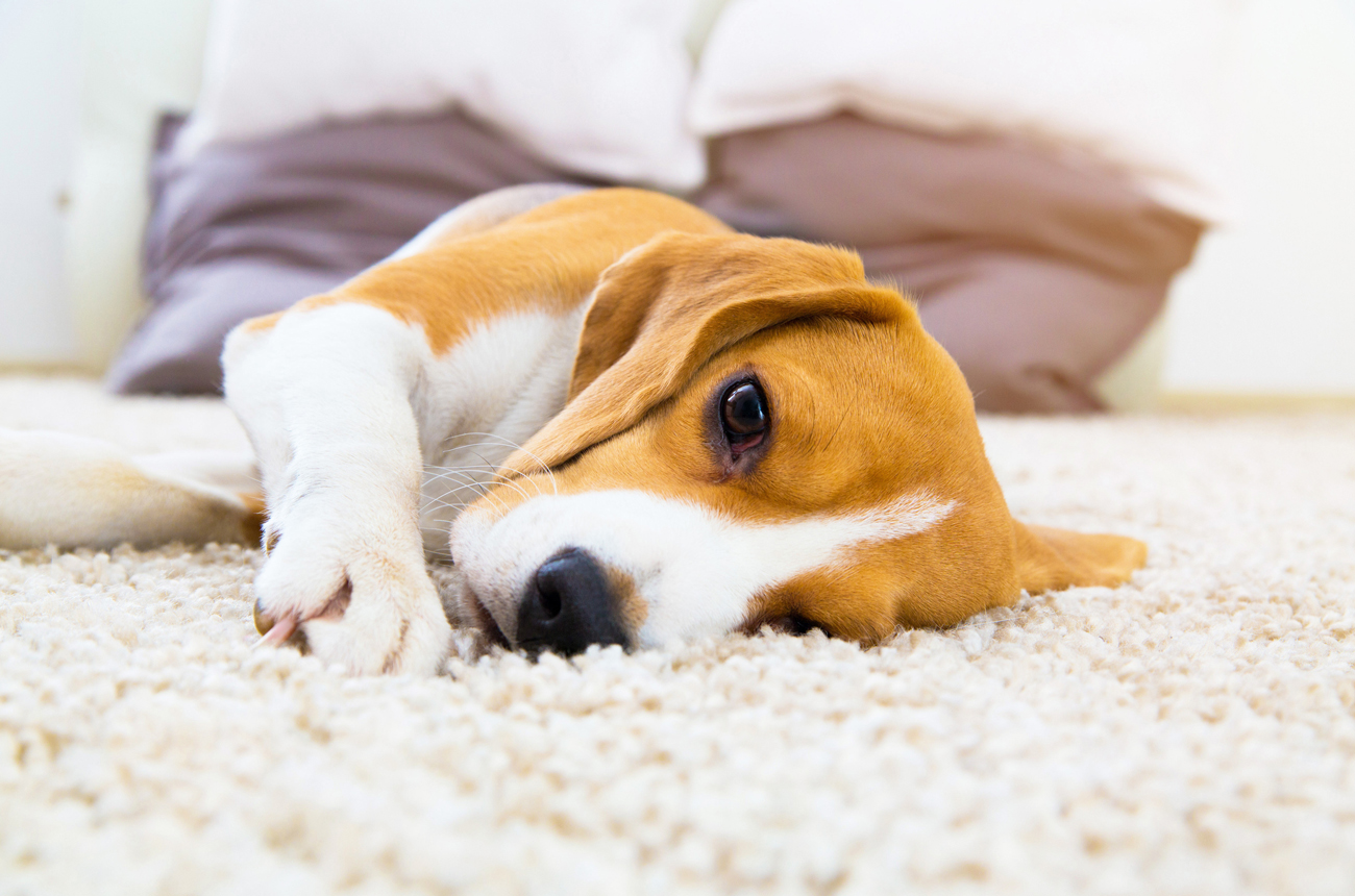 3 Tips to Minimise Pet Odour in Your Home