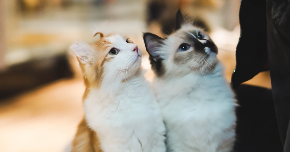 How Cats Can Help Fix Politics  -- No, Seriously