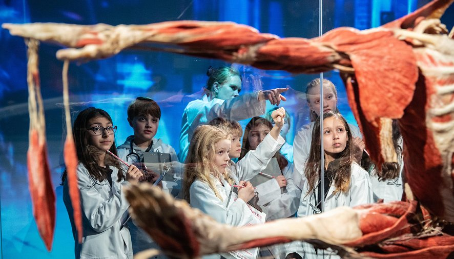 Educational fun at Body Worlds