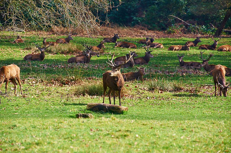 The residents of Richmond Park