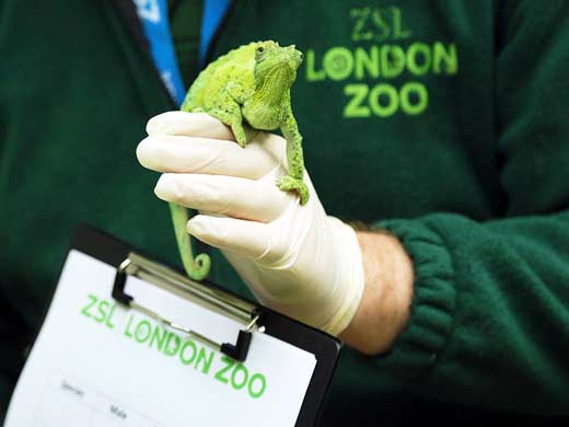 zsl london zoo animal fun for children