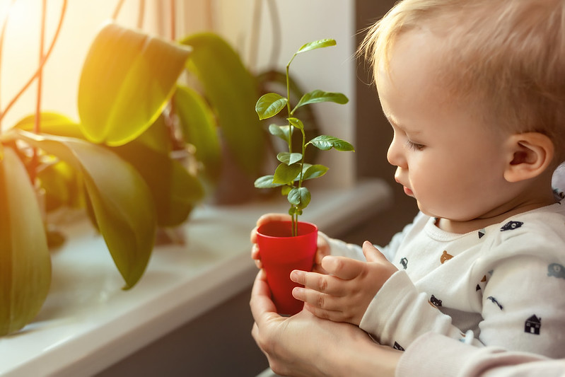 Child looking at plants