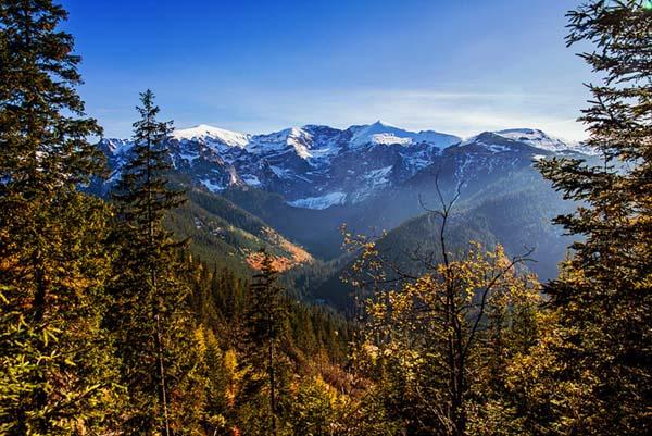 Mountain seen through the trees