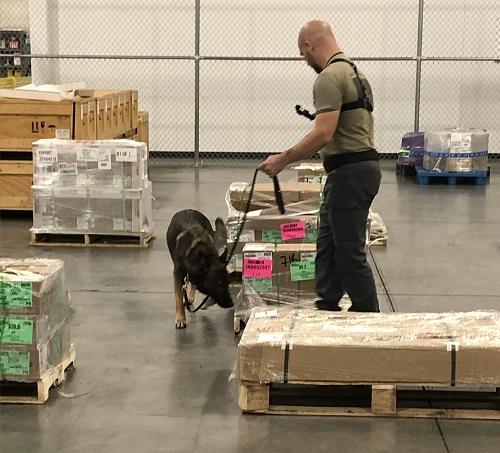 JAS ORD, Dog screening demonstration in 2019