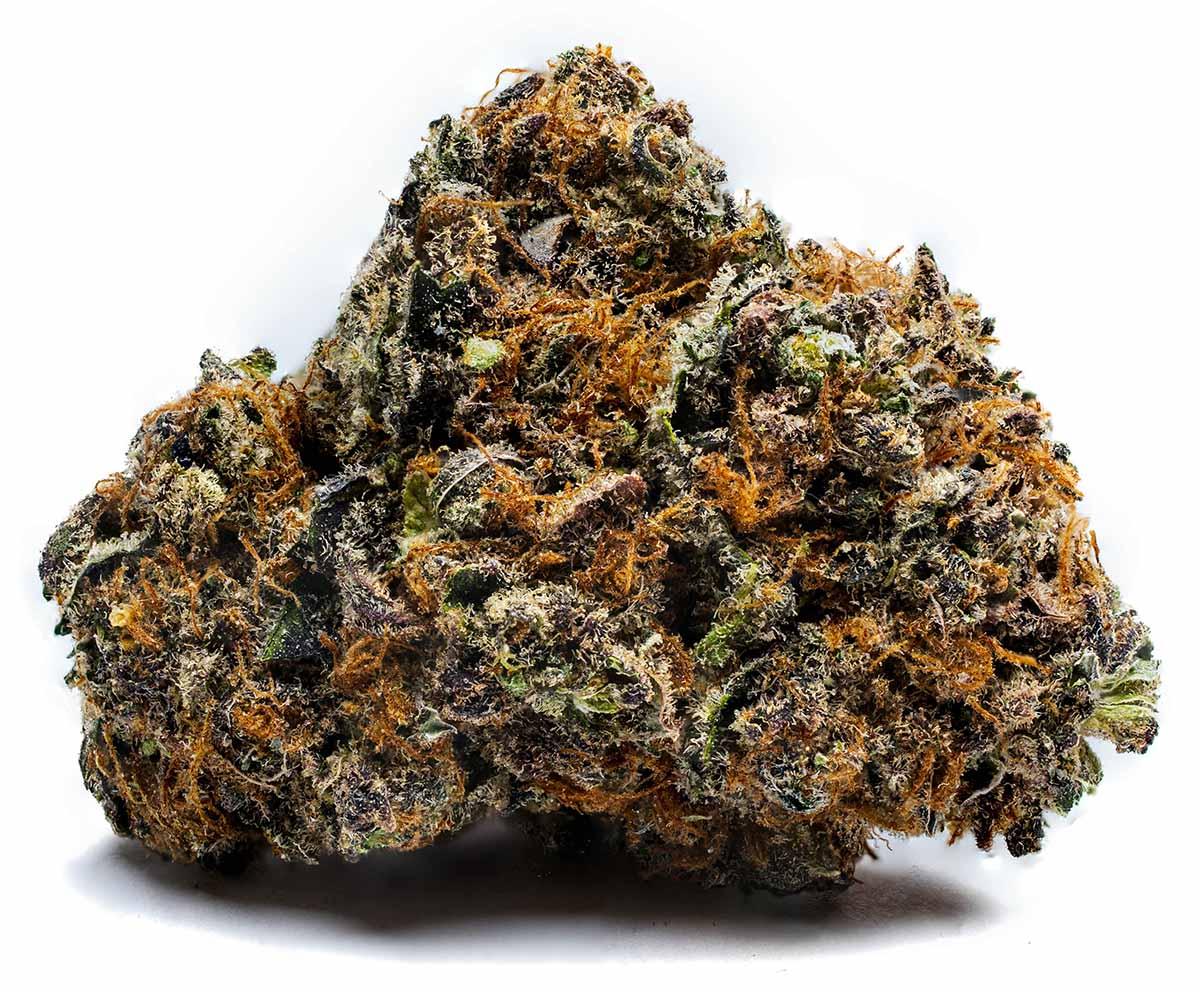 Cultivate   Massachusetts Premium Cannabis