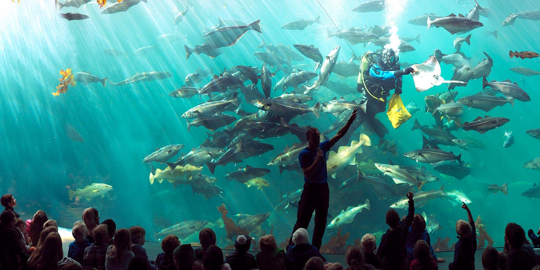 Aquarium mit Taucher, der die Fische füttert.