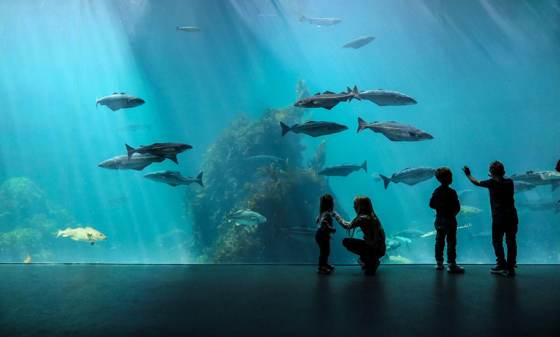 Stor akvariumtank med fisk og barn som ser på.
