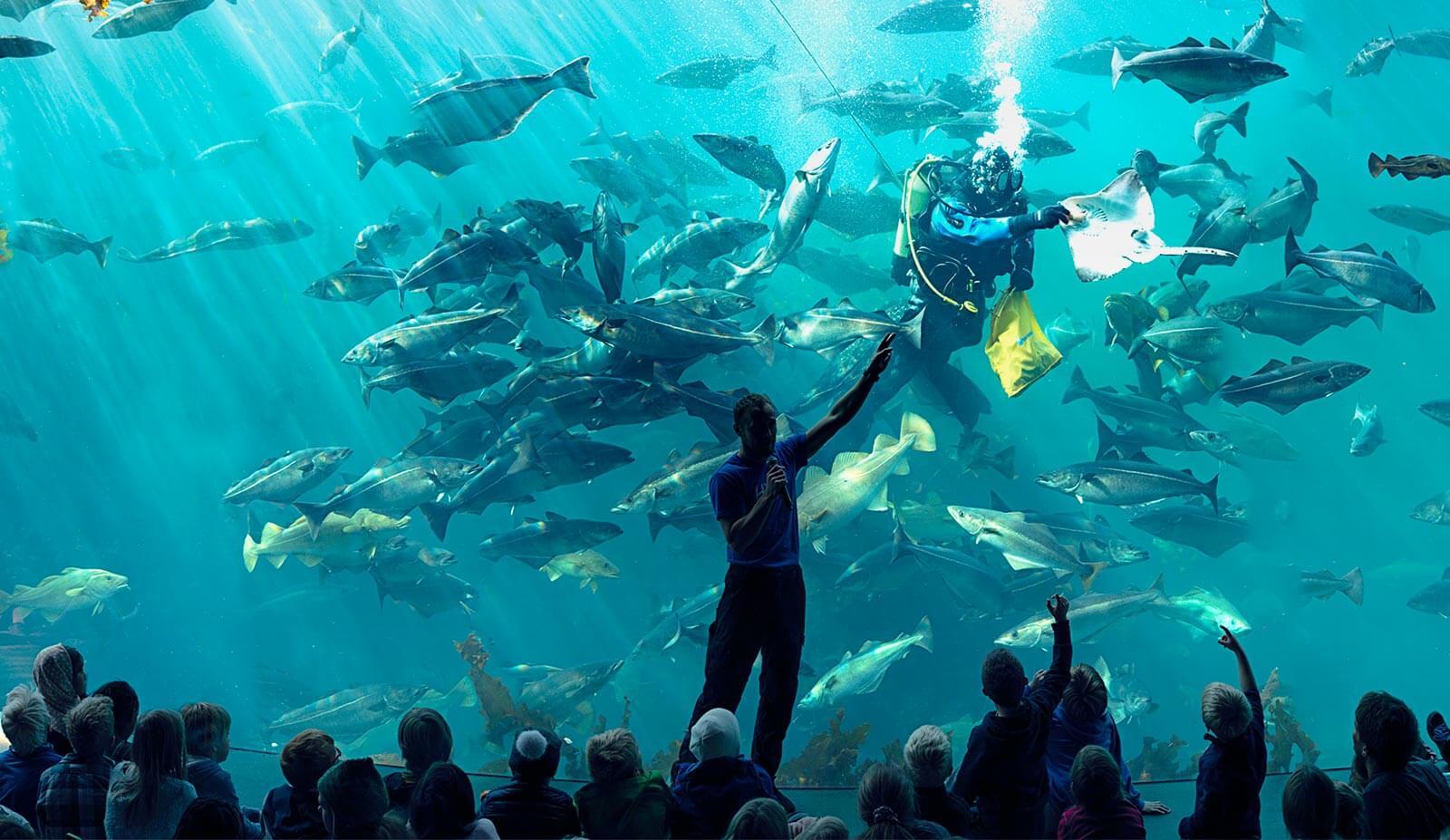 Barn ser på dykkershow.