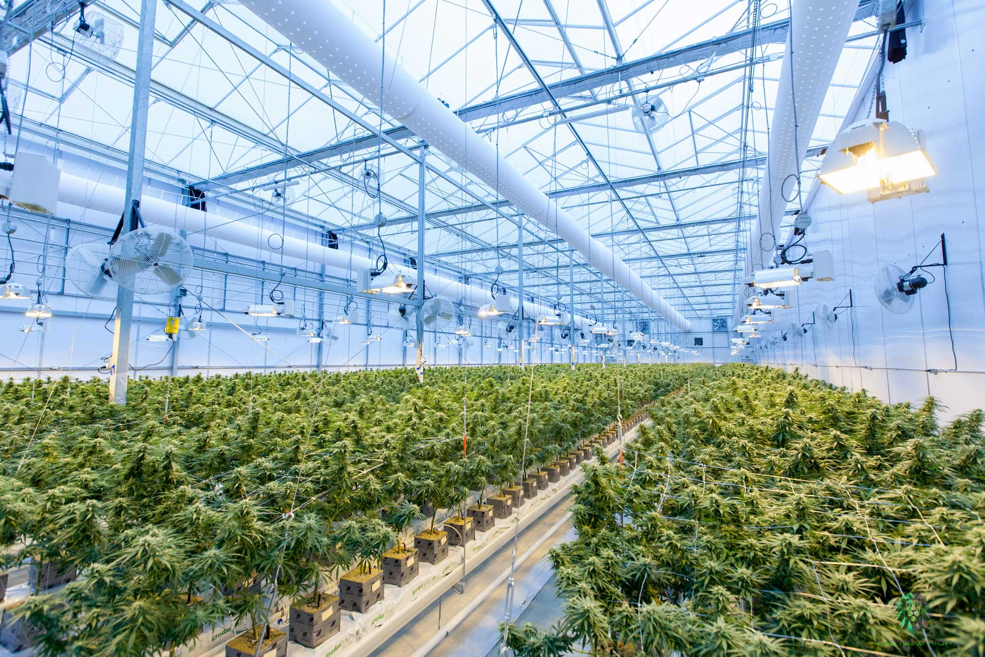 High-tech Horticulture: The impact of renewable energy on the cannabis industry