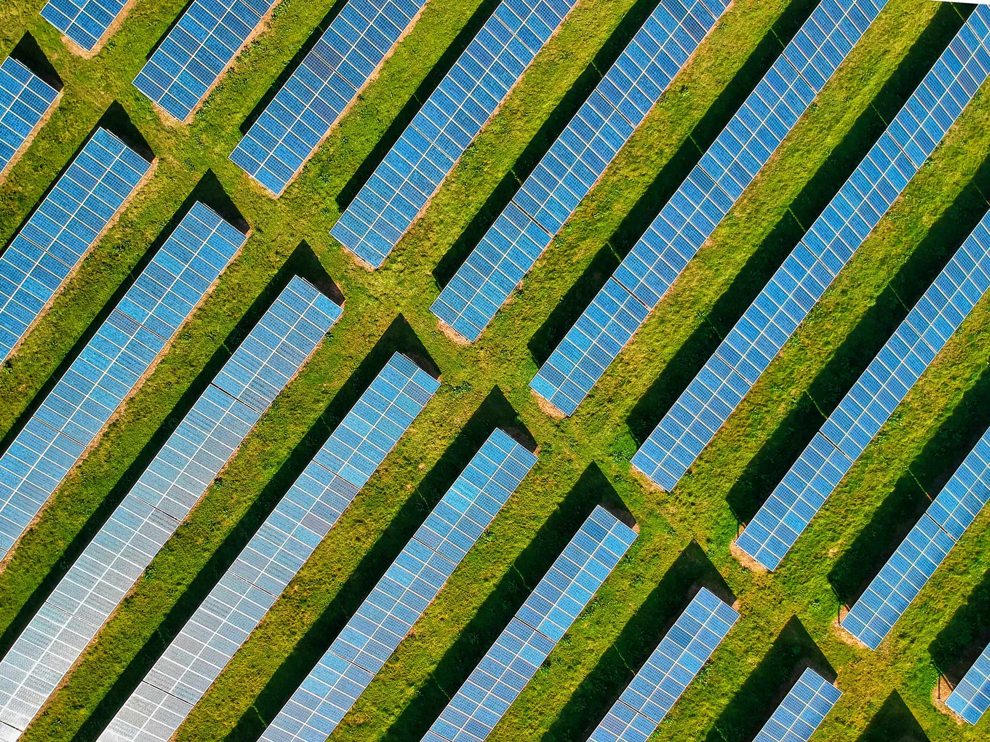 Agrivoltaics: Renewable energy and food combined