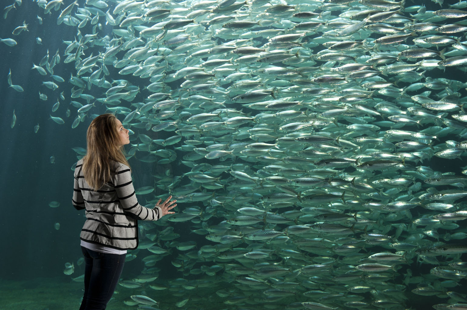 Hering - das Silber des Meeres