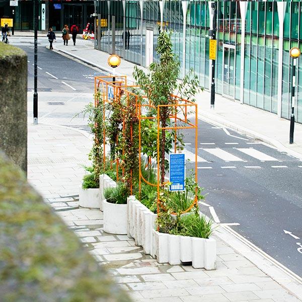 Long shot of community garden