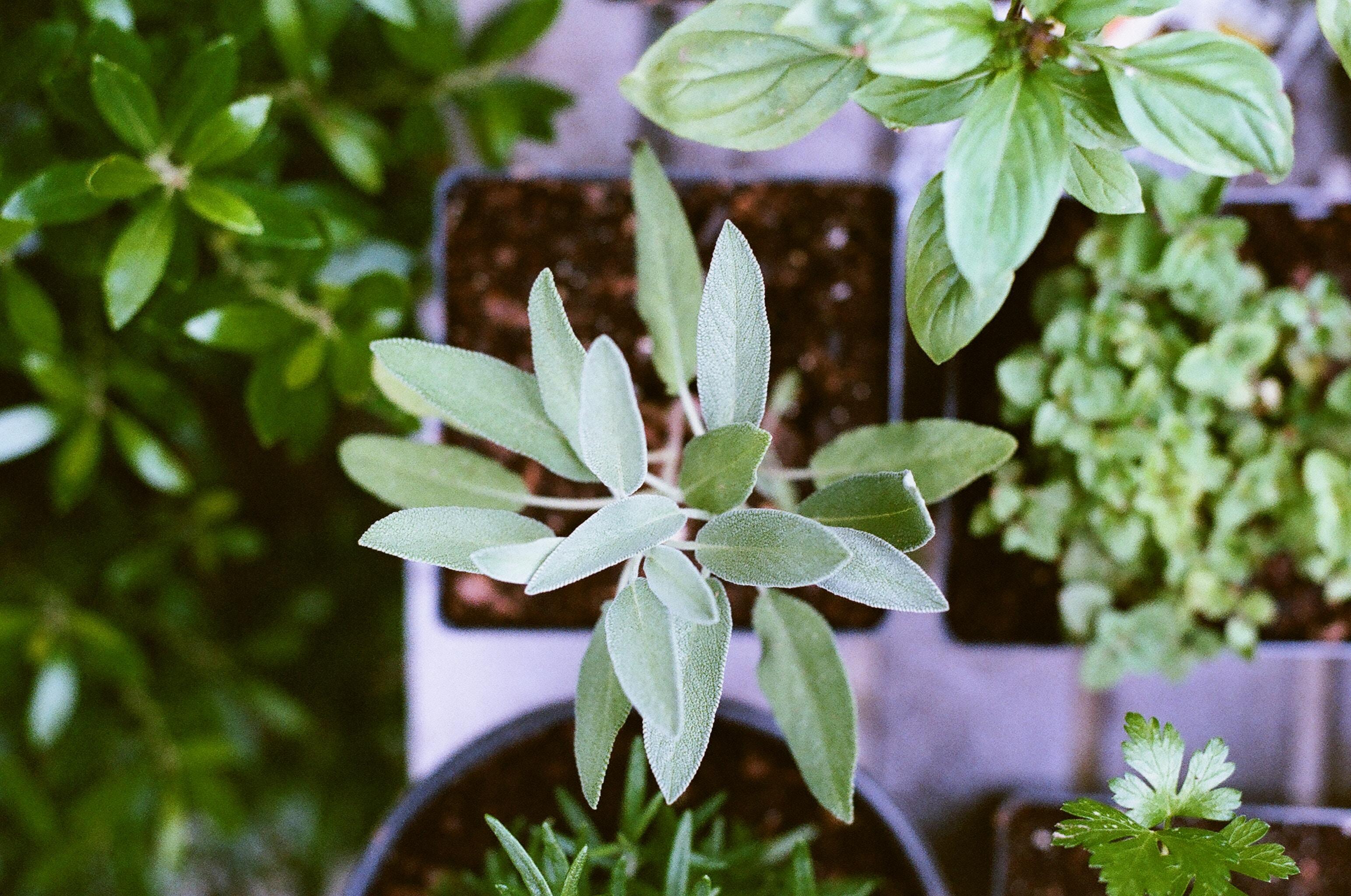Salads, Sprouting & Herbs workshop demos