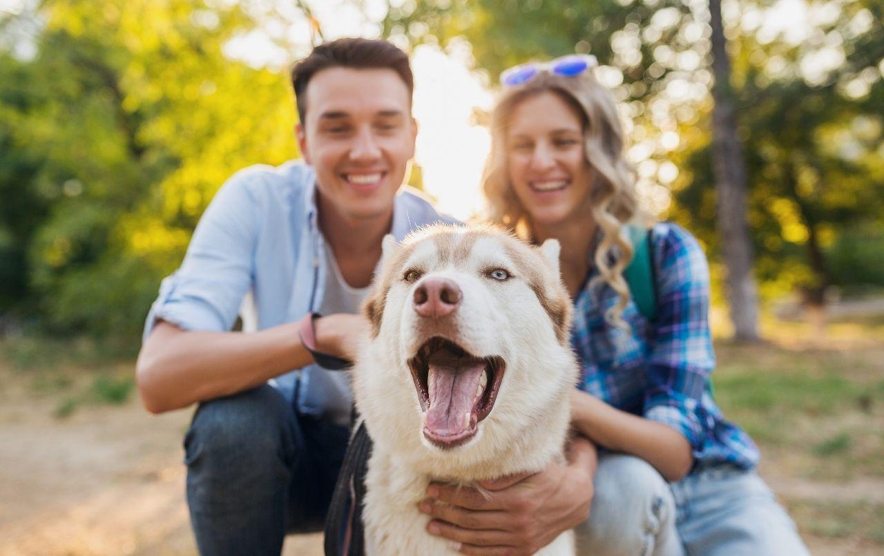 Qual a melhor hora de ter um pet?