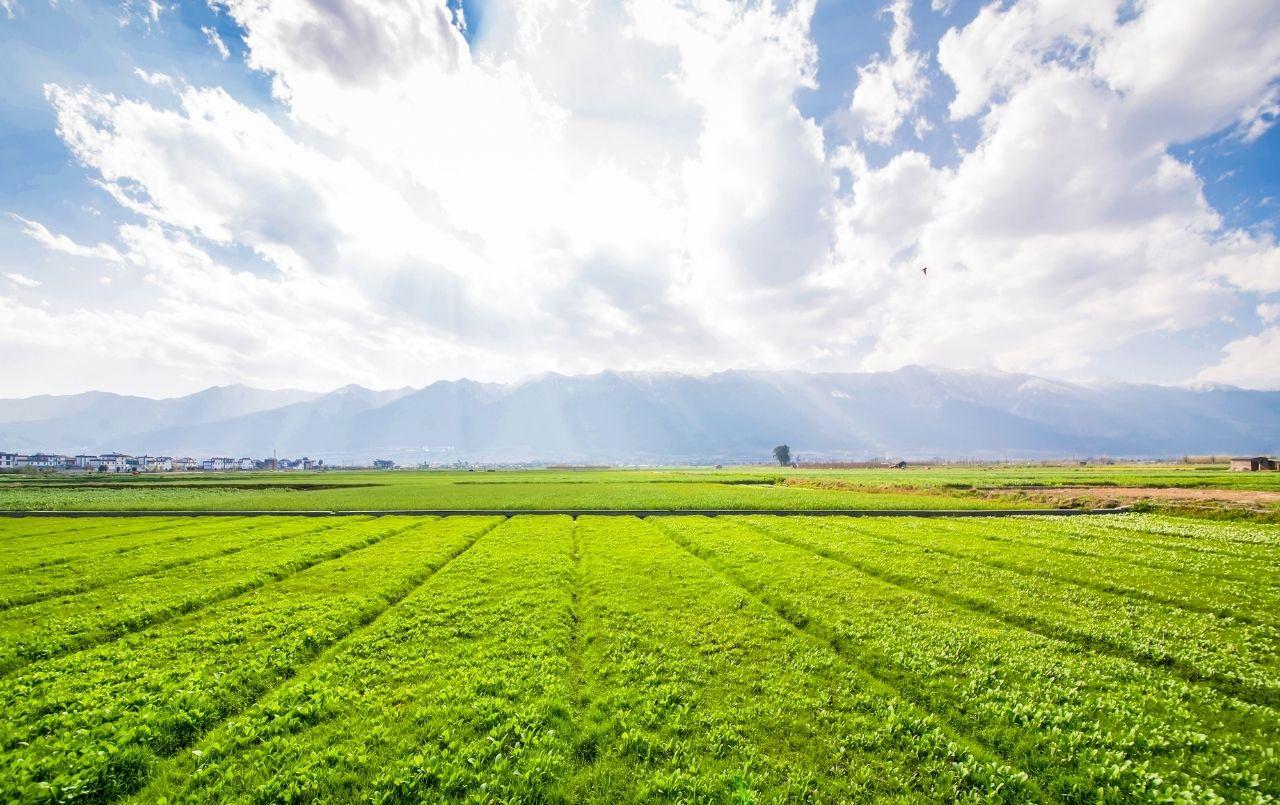É possível comprar um terreno rural com o consórcio?