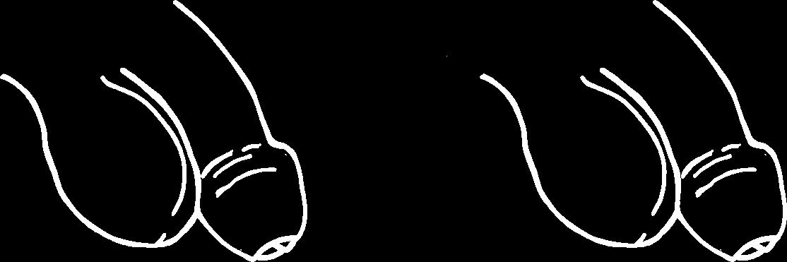 Vergleich eines nicht erigierten Penis mit einem Penis, der unfähig ist, eine Erektion aufzubauen.