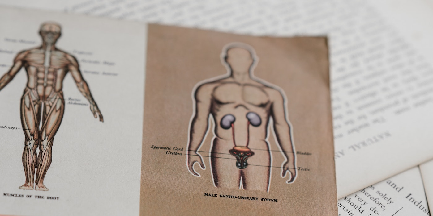 Anatomische Zeichnung | Annie Spratt - Unsplash