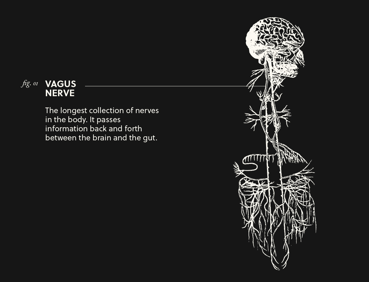 Vagus Nerve & Its Connection to Our Gut
