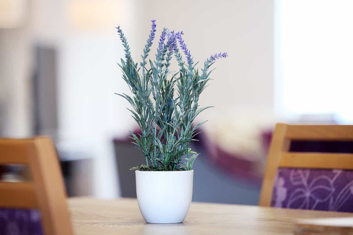 Plant on a table at Balmoral Place
