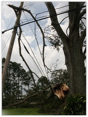 A downed telephone pole and broken tree limbs across electrical wires depicting common hangers the require removal.
