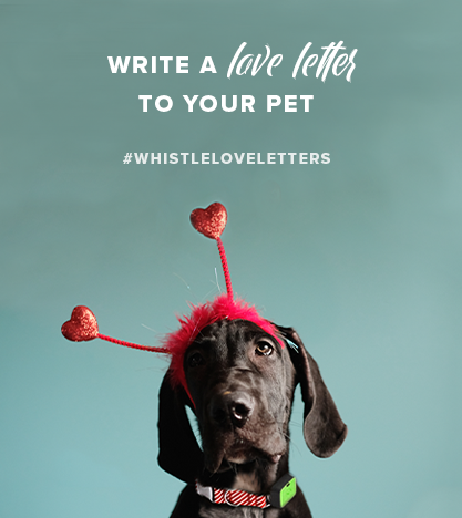 Write a love letter to your pet