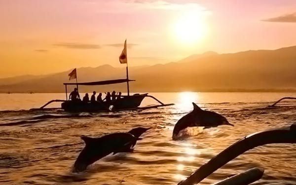 Bali Discovery Dolphin Watching Tour*