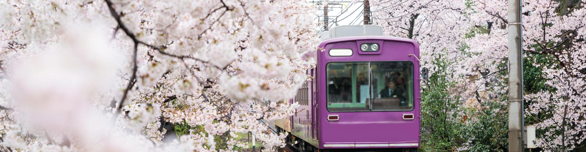 Hassle-free Osaka + Kyoto Apartment Rail Tour*
