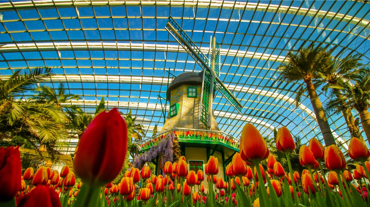 Garden By The Bay, Tulips Mania