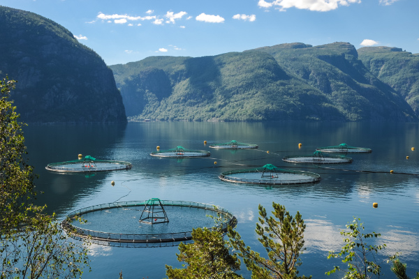 As salmon aquaculture continues to expand, the industry is finding that small changes on the production side are delivering big results in profits.