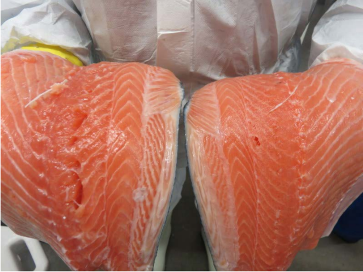 Note the gaping in the traditionally processed fillet vs. the firm fillet after SUB-CHILLING™.